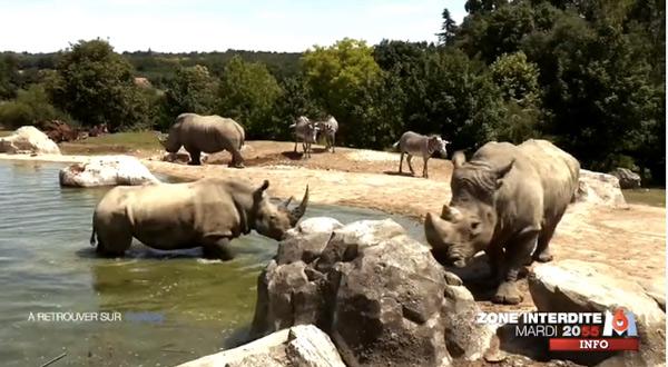 Avis sur Zone Interdite au Zoo de Beauval sur m6
