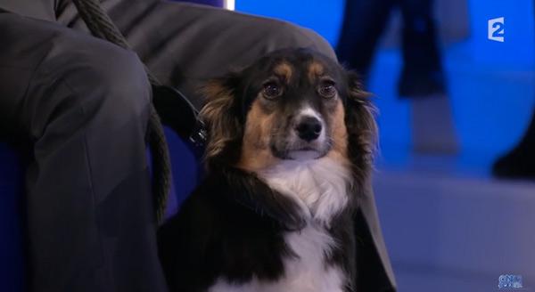 La chienne roumaine de Michel Drucker : Isia gentille ou pas ?